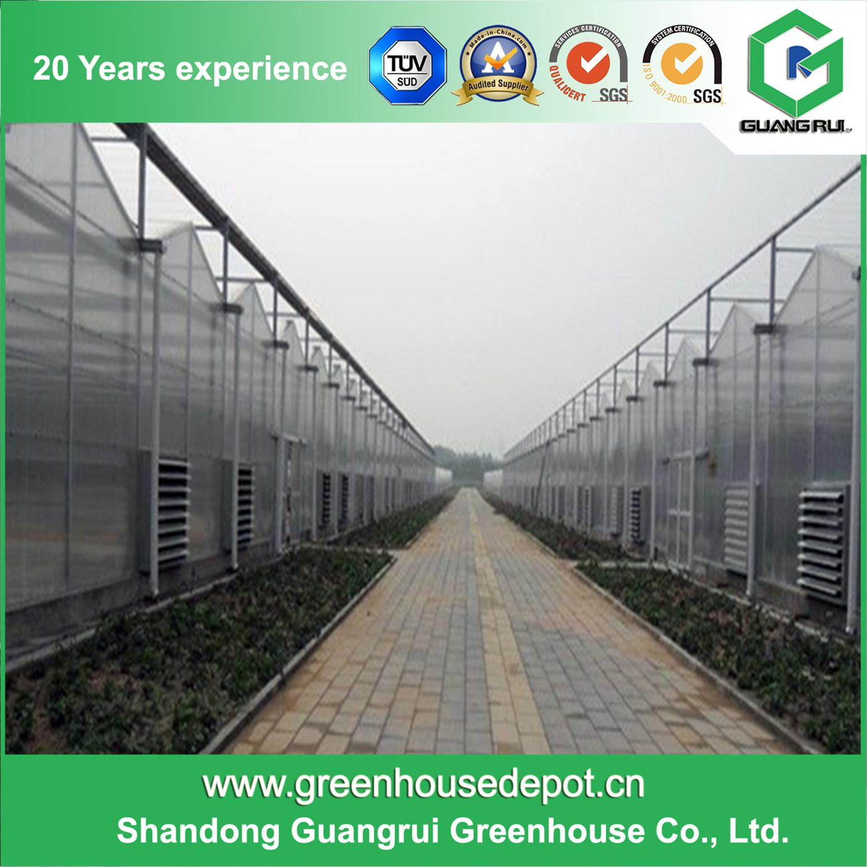 Multi-Span Venlo Type Polycarbonate/ PC Sheet Greenhouse for Plant