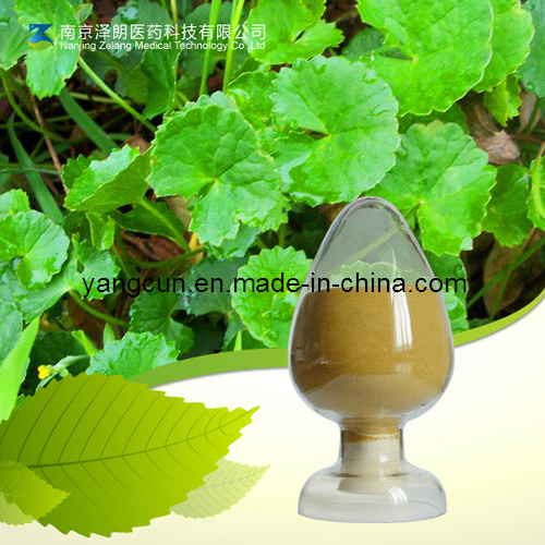 Natural Gotu Kola Extract 80% Asiaticosides for Skin Whiting