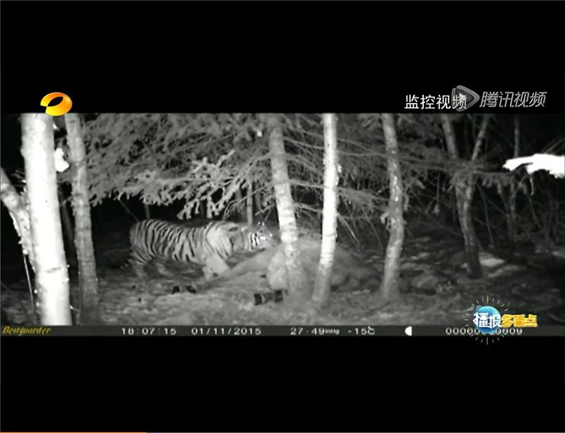 12MP 1080P Scouting Camera