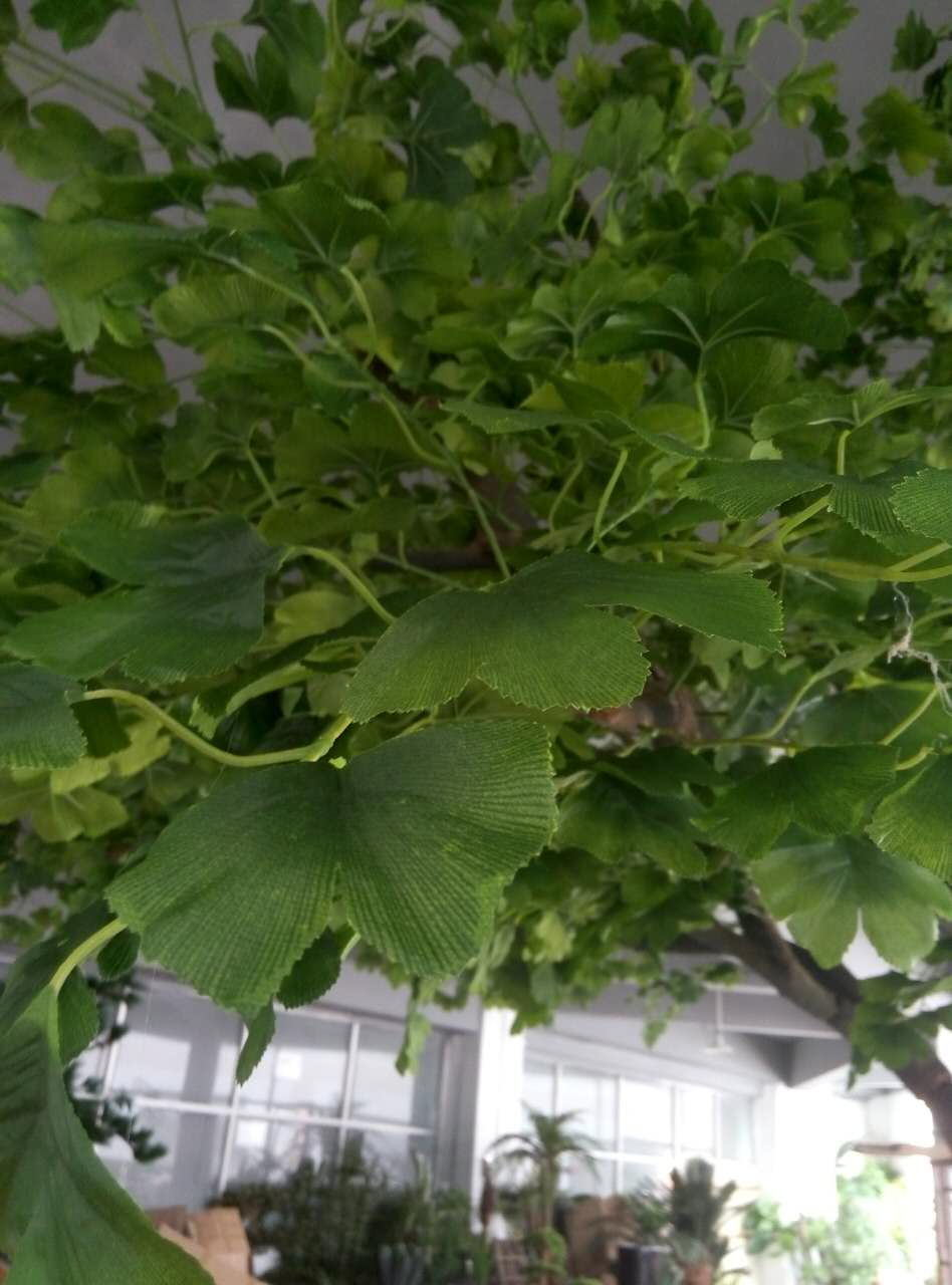 Green Leaves Artificial Maidenhair Tree (for indoor&outdoor decoration)
