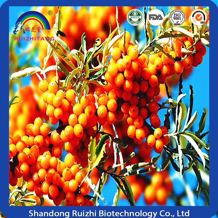 Organic Seabuckthorn Fruit Powder