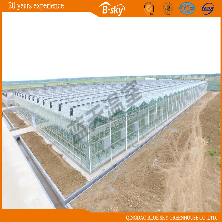 Glass Multi-Span Greenhouse