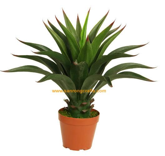 Silk plant src 10