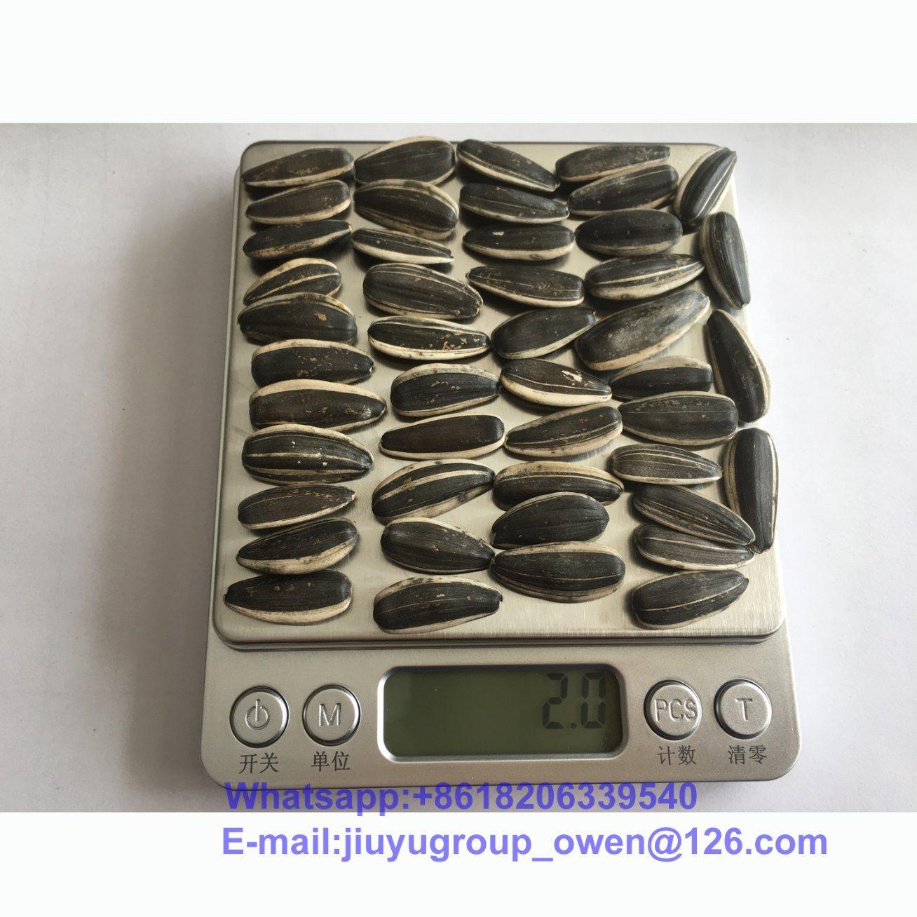 Inner Mongolia New Crop Sunflower Seeds