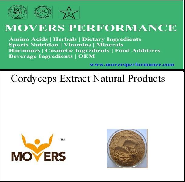 Natrual Plant Extract --- Cordyceps Extract