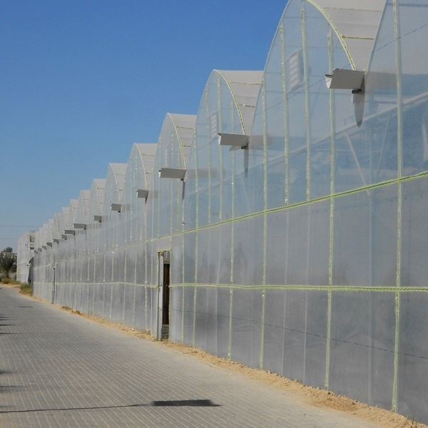 High Quality Multi Span Agricultural Film Greenhouse for Sale