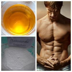 99%Min Purity Steroids Powder Testoster Base CAS No.: 58-22-0 for Bodybuilding
