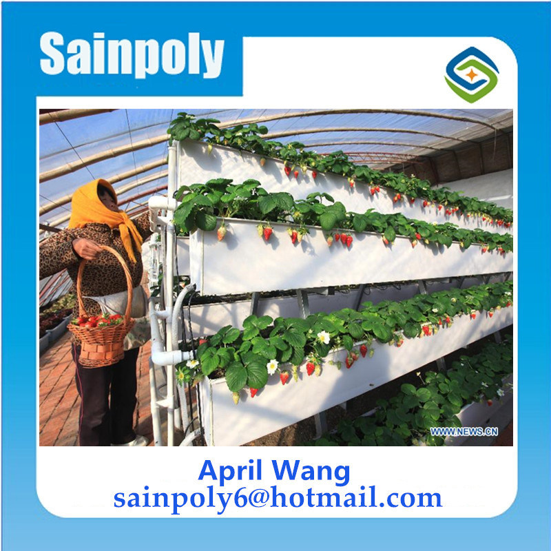 Wholesale PC Sheet Multi-Span Venlo Greenhouse for Hydroponic