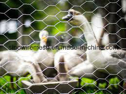 Sailin China Hot Dipped Chicken Wire for Poultry Netting