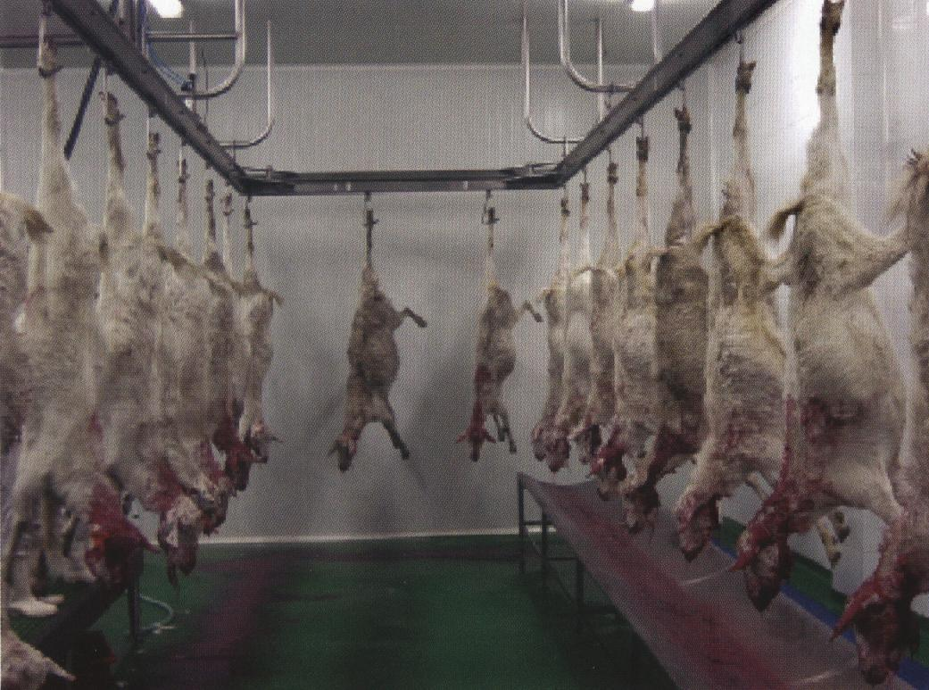 China Sheep Slaughterhouse Made in China Photos & Pictures ... - photo#18