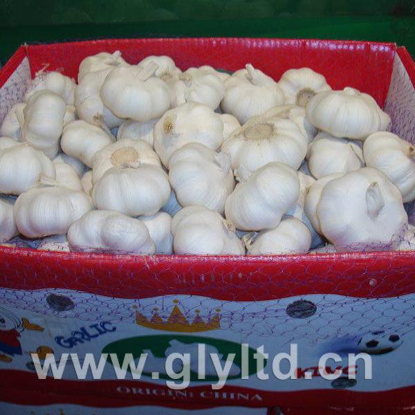 New Crop Fresh White Garlic Globalgap Certified