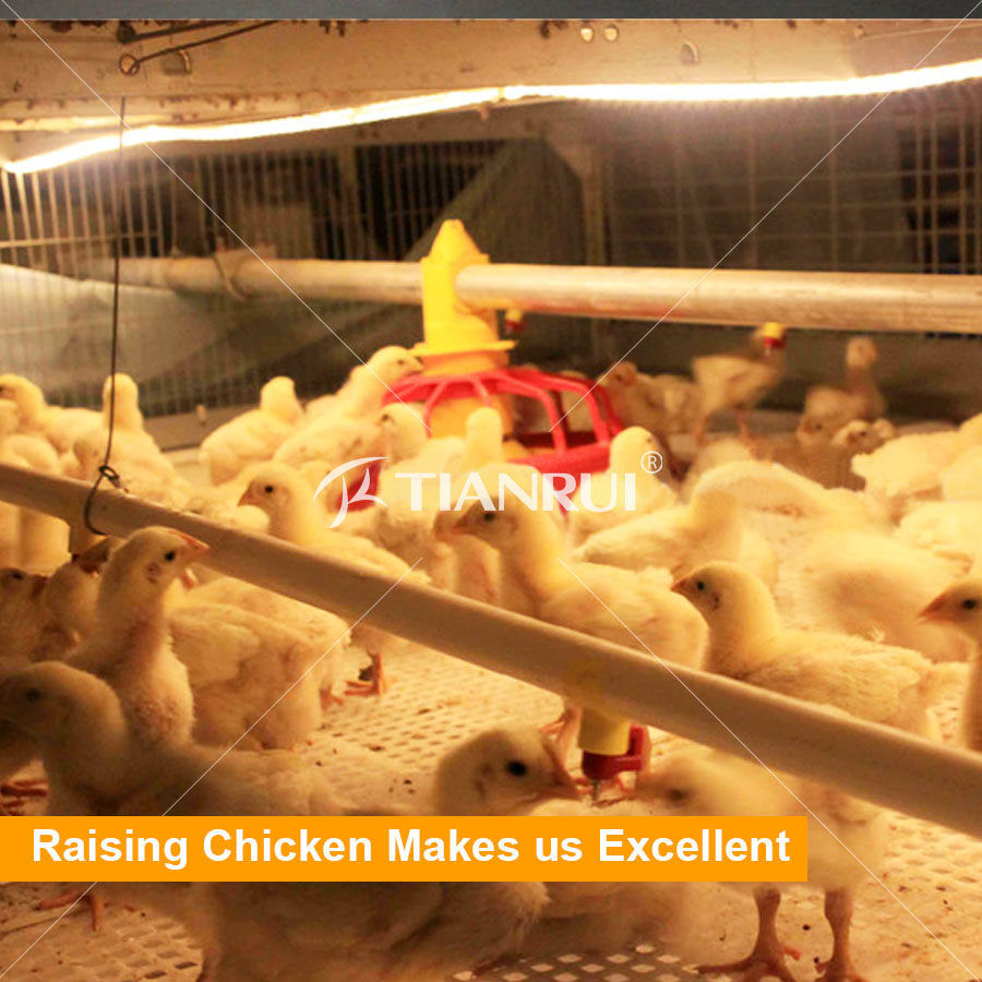 High quality automatic broiler chicken cage for sale