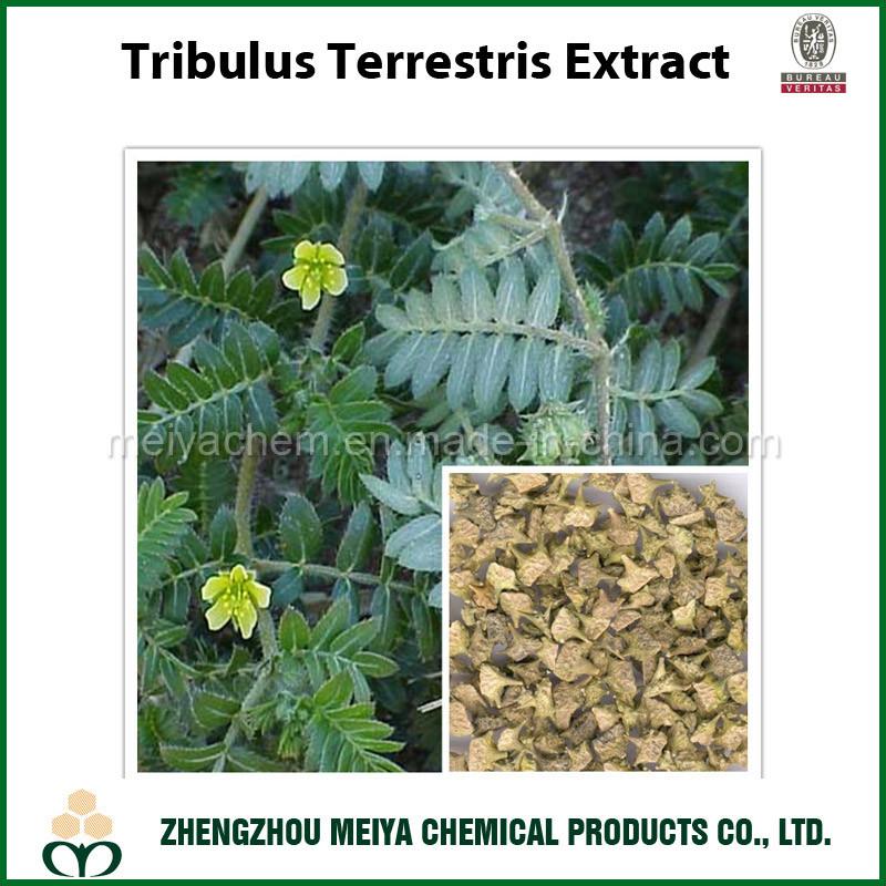 Tribulus Terrestris Powder Extract with Quality Saponin