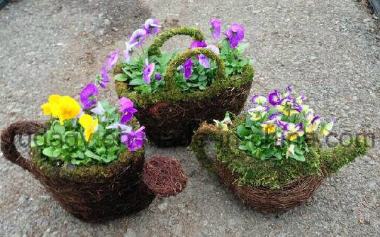 Decorative Moss Watering Can Mixed with Salim Rattan