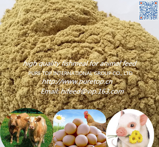 Fish Meal with High Protein for Animal Feed (export grade)