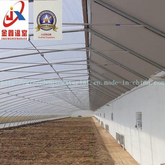 Plastic Film Solar Greenhouse for Vegetable Planting