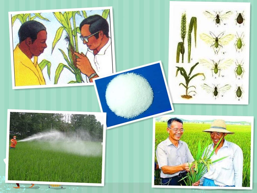 Agroagrochemicals Insecticide Pesticide 95%Tc, 98%Tc, 10%Wp, 25 Wp, 20%SL Imidacloprid