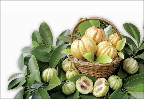Garcinia Cambogia Extract / Hca