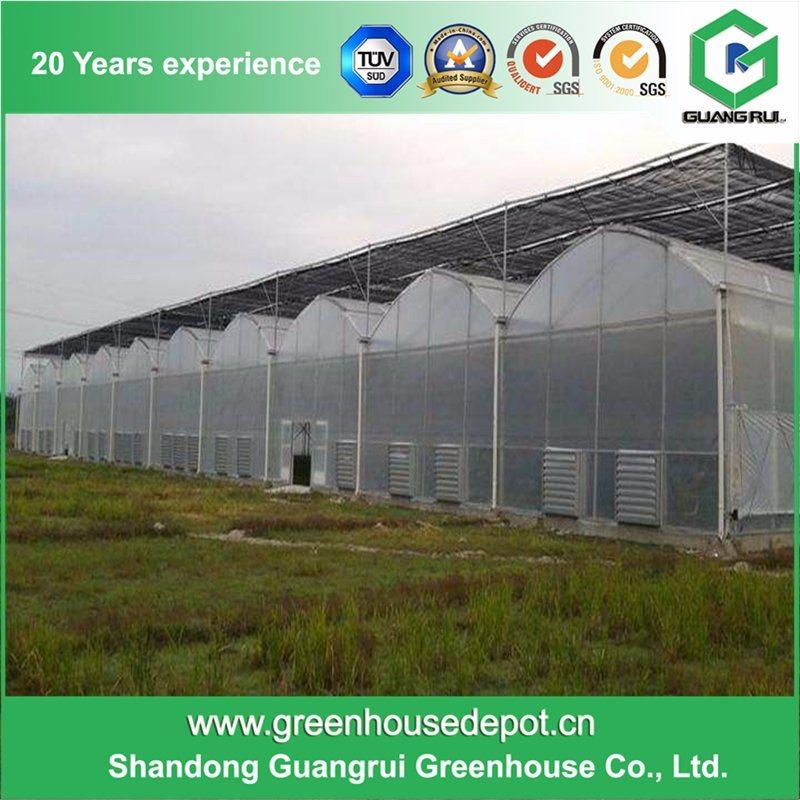 Best Selling Multi-Span Plastic Film Greenhouse for Sale