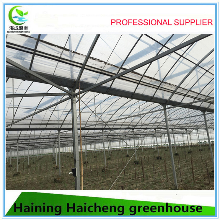 Multi-Span Type and Large Size PC Sheet Commercial Greenhouse