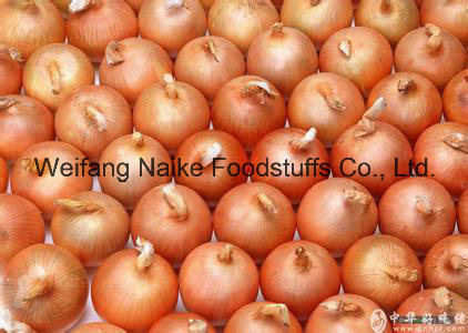 New Crop Fresh Onion Vegetable