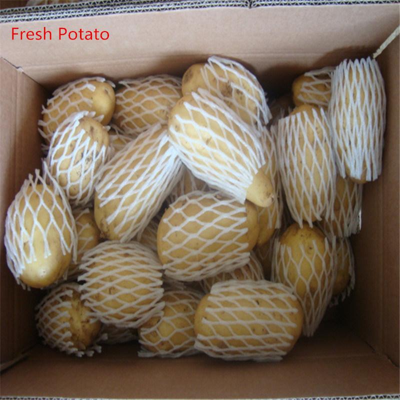 New Crop Fresh Holland Potato