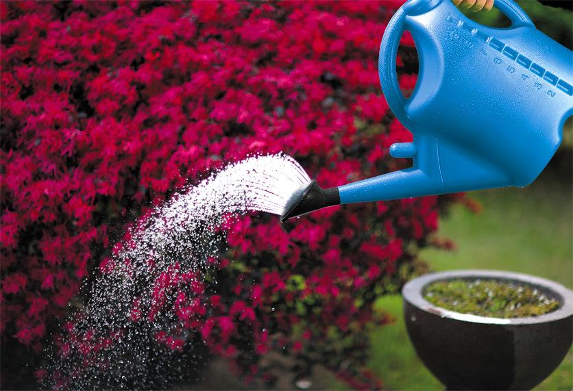 Seesa Shixia 8L Plastic Garden Tool Household Watering Can&Watering Pot (SX-610-80(PE))