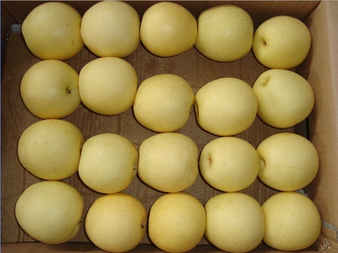 Crown Pear, Huangguan Pear/Chinese Fruits of High Quality