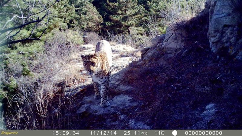 12MP HD 1080P Invisible IR Hunting Camera Trap Viltkamera