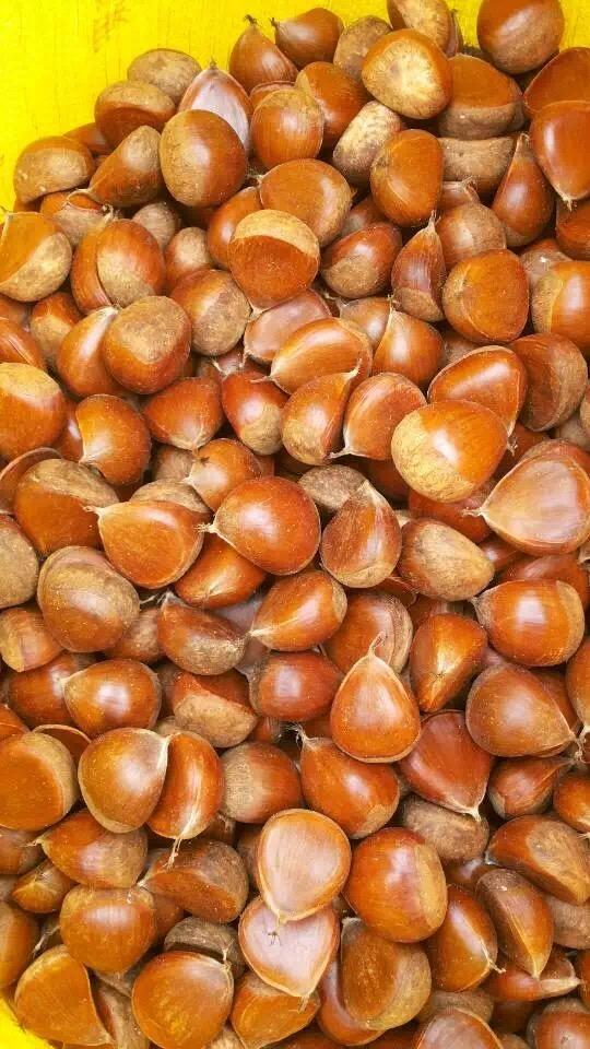 2016 New Season Export Professional Chinese Fresh Chestnut