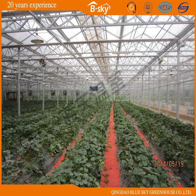 Modern Design Glass Greenhouse for Picking Garden