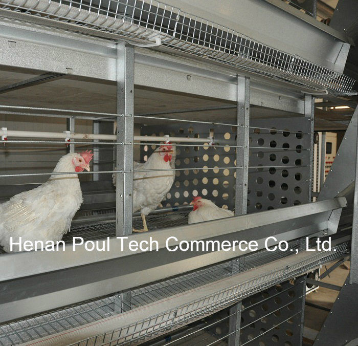 Galvanization Automatic Breeder Chicken Cage System (H type)