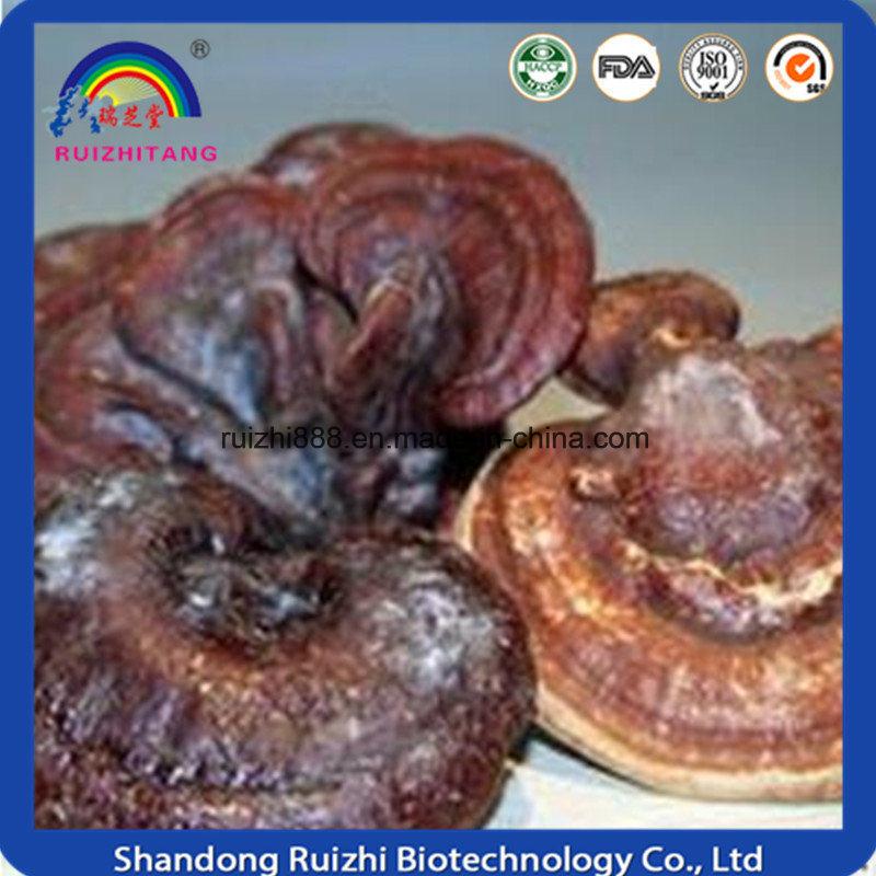 Hot Sell Ganoderma Lucidum Polysaccharides