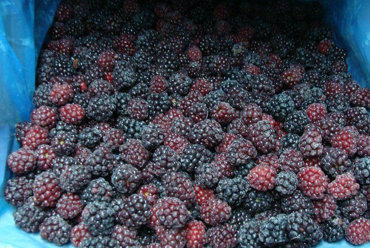 IQF Blackberry or Frozen Blackberry