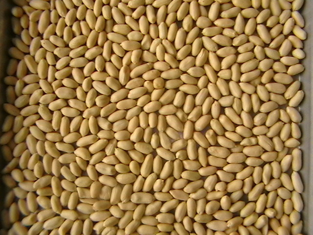 New Crop Blanched Peanut Kernels