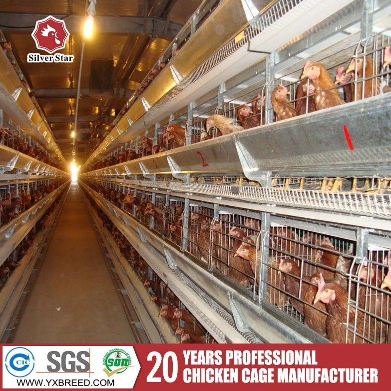 Type-H Chicken Cage/Chicken House/Chicken Coop Poultry Farm Design for Layers