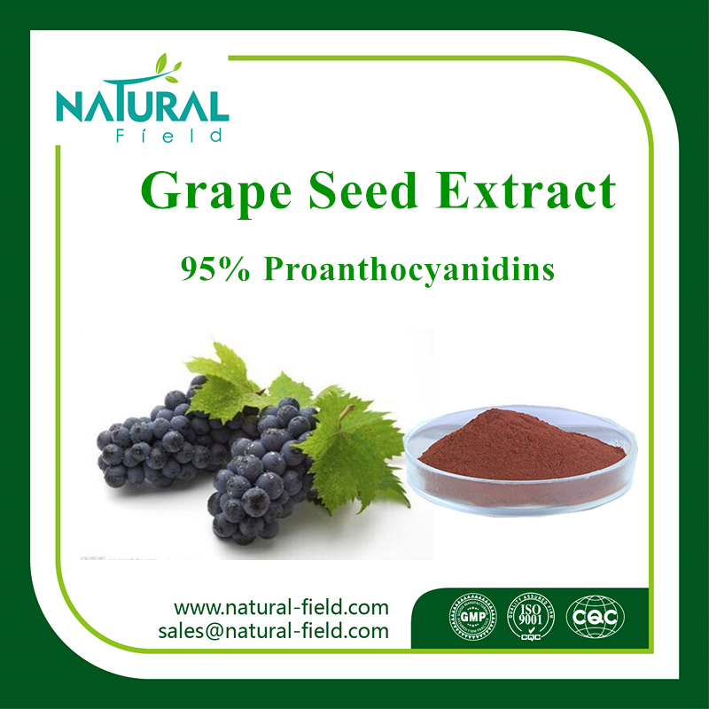 Factory Supply High Quality 95% Proanthocyanidin Grape Seed P. E