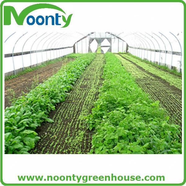 Open Roof Tunnel Greenhouse
