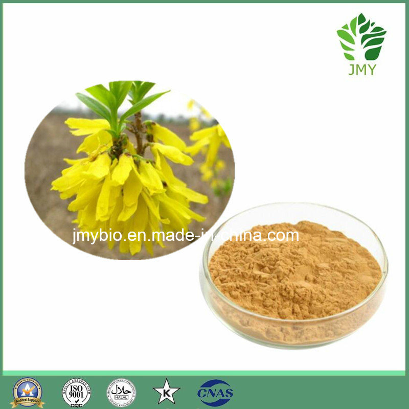 Relief of Depressive Disorder 100% Natural Fructus Forsythia Extract/ Phillyrin