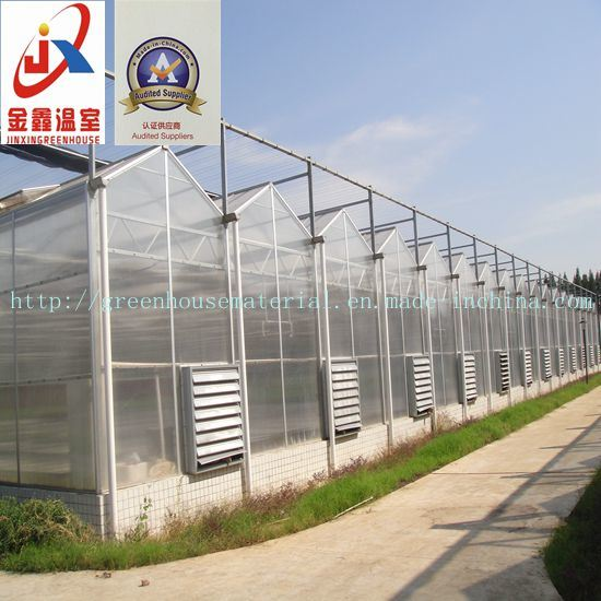 Venlo Style Polycarbonate Sheet Greenhouse