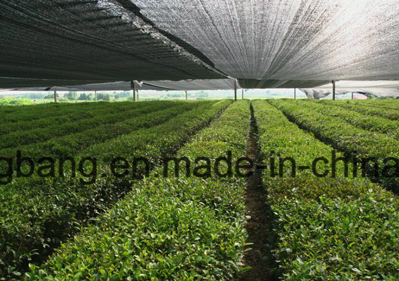 Galss Greenhouse with Inside Ground Cover Mat