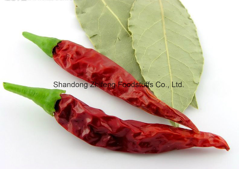 Dry Red Chilli of New Crop