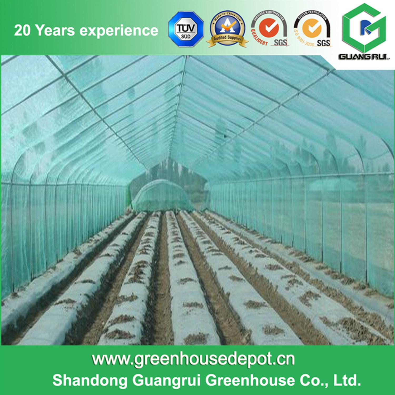 Multi-Span Gothic Film Greenhouse for Farm