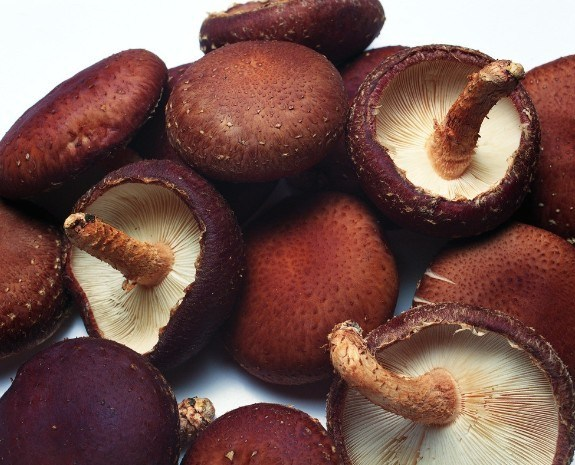 Shitake Mushroom Extract for Foods and Supplement