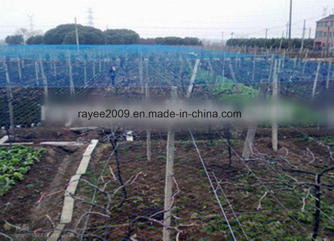 EU USA Markets Virgin Agricultural Anti Bird Net Balcony Net