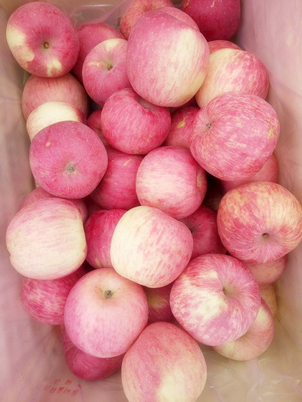2017 Shandong FUJI Apple with High Sweet & Crispy Flavour