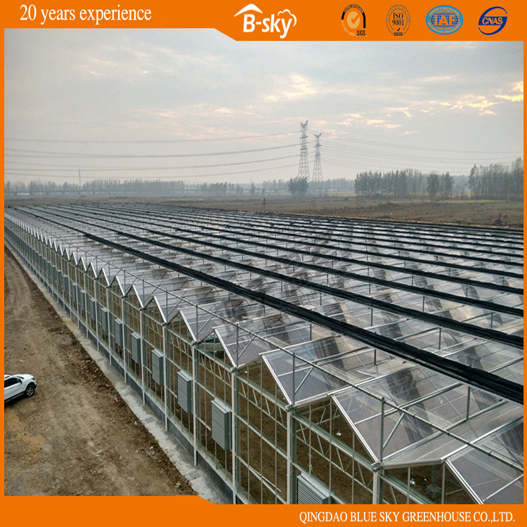 High Quality F-Clean Film Greenhouse