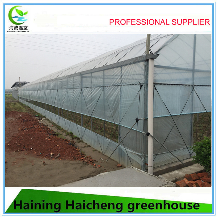 High Quality Large Size Multi-Span Agricultural Commercial Greenhouses
