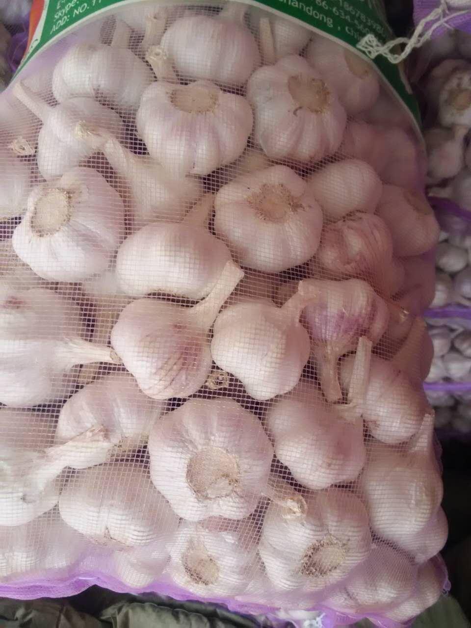 2017 New Crop Fresh Garlic (5.0)