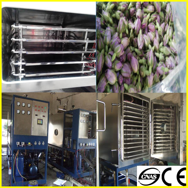 Vacuum Freeze Dryer for Banana 100kg Per Batch